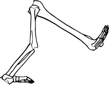 Skeleton attempt